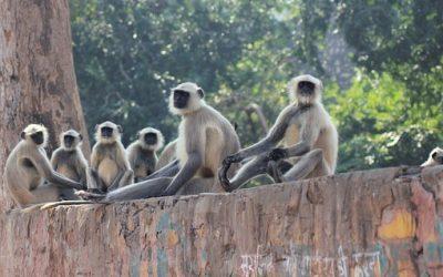 Five Monkeys, a Banana and the Board